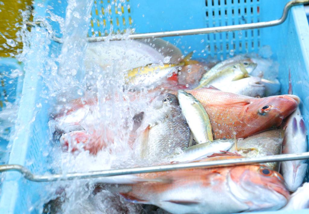 福井県小浜市鮮魚